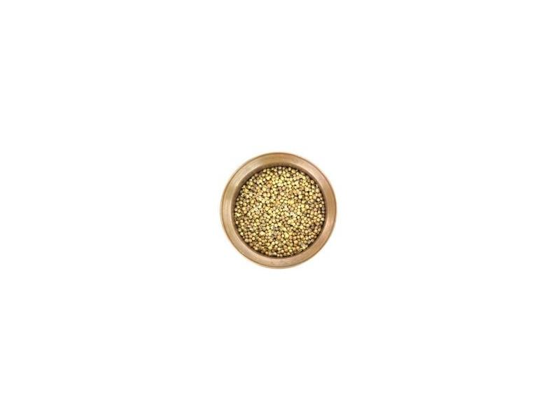 Cilantro, semilla